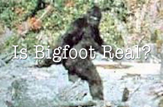 The great debate of the authenticity of Bigfoot- real or hoax