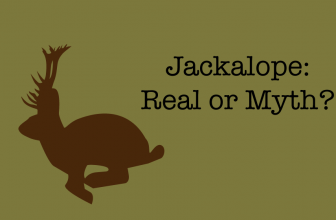 The Jackalope: Real, or Mythological Creature?